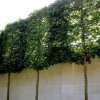 Potential Best Practices for Environmentally Friendly Noise Walls