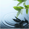 Strategies to keep pollutants out of your neighborhood storm water pond