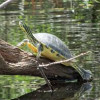 Battle over invasive aquatic weeds continues in the Hillsborough River