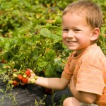 Agriculture, farming, fields, crops, kid
