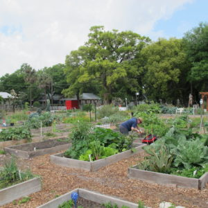 Grow Community Gardens Conference 2018 (227)