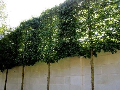 Sound wall with trees